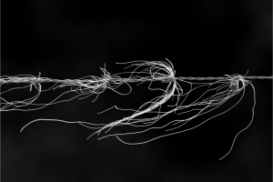 Horsehair-on-Barbed-Wire-by-Steve-Jones